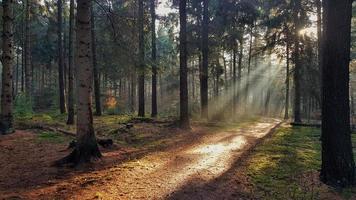 solljus strålar genom träd foto
