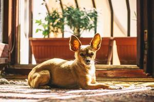 hund nära blomkrukor foto