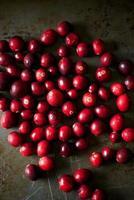 färska tranbär foto