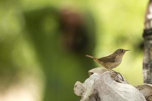 fågel som sätter sig på ett ben. foto