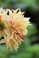 färgglad blommaträdgård i full blom foto