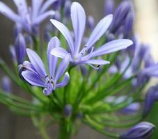 exotisk delikat blomma foto
