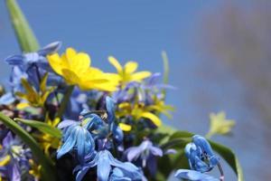 blommor bukett foto