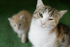 mamma katt och hennes orange kattunge foto
