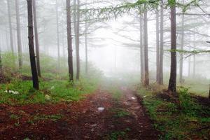 träd i dimmigt väder foto