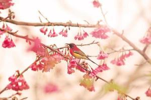 fågel på körsbärsröd blomning foto