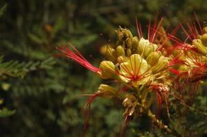 blommaträdgård i Kalifornien foto