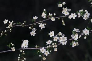 våren, blomma foto