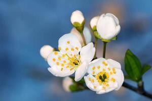 blomma frukt foto
