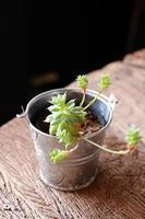 liten växt foto