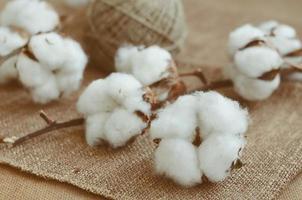 blommadesign med bomullsbollar och jutehank foto