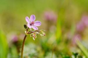 makrofoto av en liten lila vildblomma