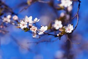 blommar på våren foto
