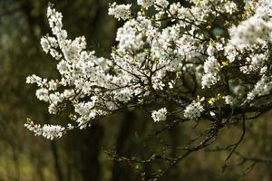 närbild av blomningen i parken foto