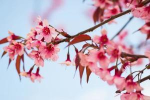närbild gren av glad blomning. foto