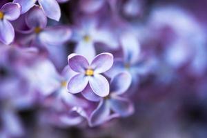 närbild av lila blommor foto