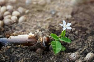 vit blomma växer i flaskan på marken, mjukt fokus foto