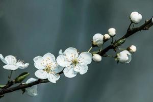 vackra blommande frukter foto