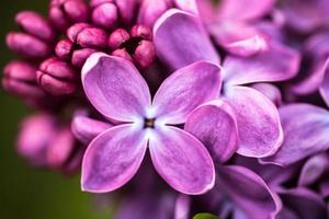 närbild av lila blommor