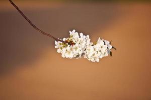 närbild gren av blom på våren foto
