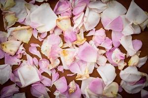 vit och rosa ros bakgrund foto