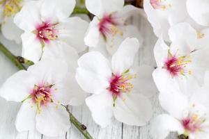 mandelblomningar foto