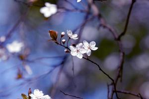 frukt blommar foto