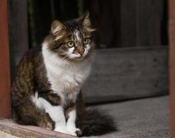 katten sitter på verandan och tittar ut på gatan. foto