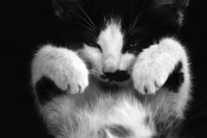 sömnig kattunge foto