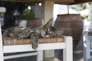 vacker liten katt eller kattunge som ligger på en stol. foto