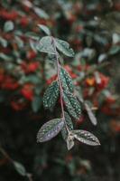 grönt blad växt foto