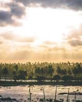 kokosnöt och palmer