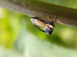 närbild av insekt på gren
