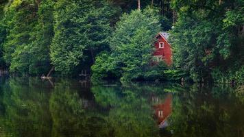 träd vid sjön under dagen