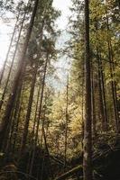 höga träd med dimma foto