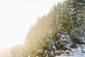 snötäckta träd i solljus