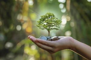 plantera grödor på en hög med mynt till hands investeringskoncept i affärer