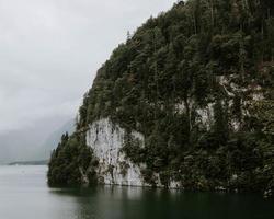 träd på klippan nära vattenmassan foto