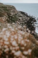 strand med stenar och blommor nära havet foto