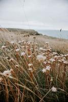 närbild av fältet med vita blommor foto
