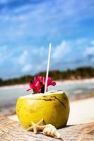 kokosnötter på stranden foto