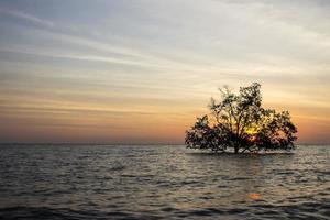träd i havet foto