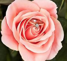 vigselring i rosa elegant ros foto