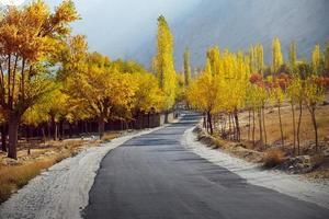 färgglada träd på hösten längs den tomma vägen foto