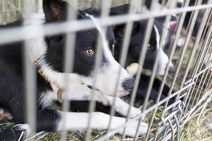 hemlösa hundar i burar foto