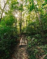 träväg i skogen