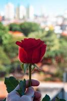 röd ros i urban stadsinställning foto
