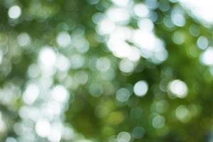 defocused mjuk grön bokeh bakgrund foto