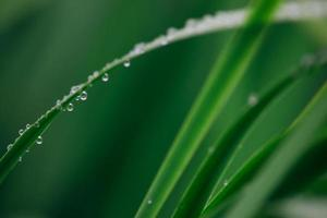 vått grönt blad foto