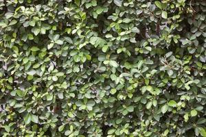 grönt blad konsistens foto